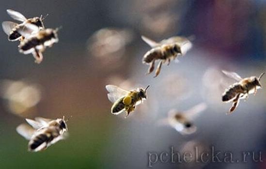 Пчёлы под кокаином