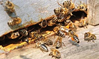 Пчёлы покусали мужчину