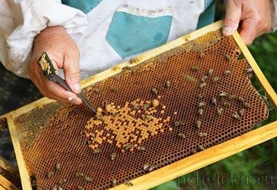 Субсидирование пчеловодов